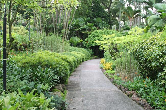 Bonito camino con vegetación a los lados