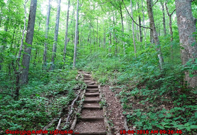Appalachian Trail Unicoi Gap