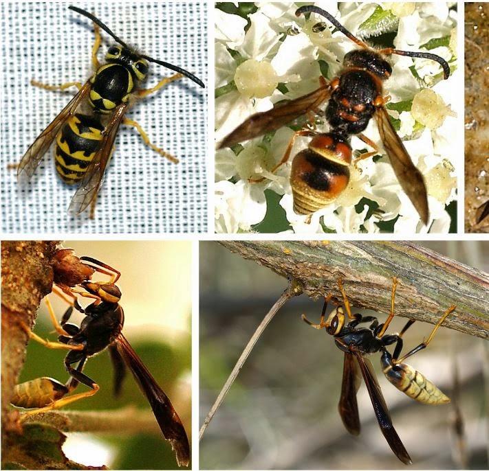 Arizona: Beetles, Bugs, Birds And More: Batesian And