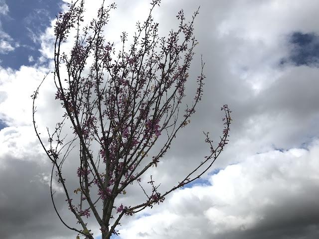 a chegada da primavera