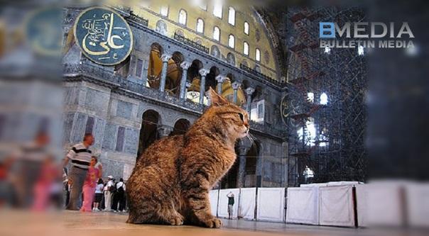 Rupa-rupanya ini Sebab Rasulullah Sukakan Kucing dari Sudut Sains. Untunglah Siapa Bela Kucing...Tahukah Anda Kenapa?Baca Pendedahan Ini..MENGEJUTKAN!!