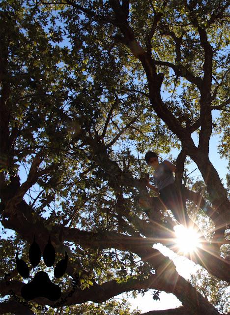 geocaching-arbre-esterel