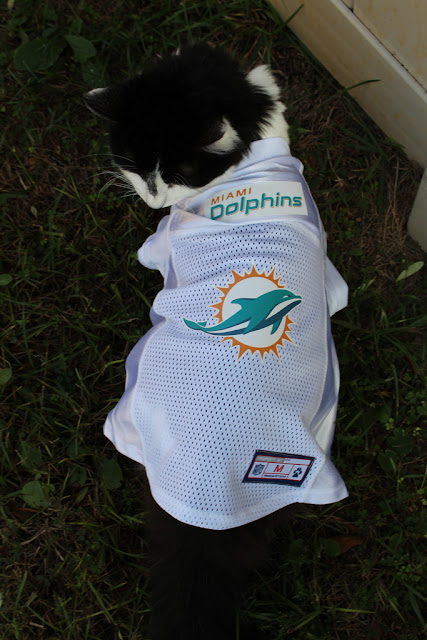 cat sports jersey