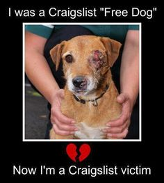 Even though life is priceless, we need to add a re-home fee to prevent dog fighters taken a life to torture to death.