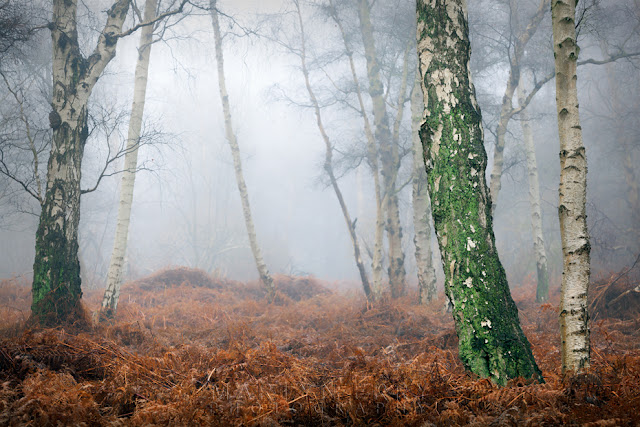 Misty weather in the Cambridgeshire Fens at Holme Fen