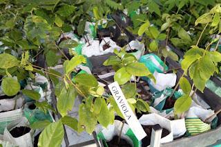http://vnoticia.com.br/noticia/3713-viveiro-municipal-troca-garrafas-pet-e-borra-de-cafe-por-mudas-de-arvores-em-sfi