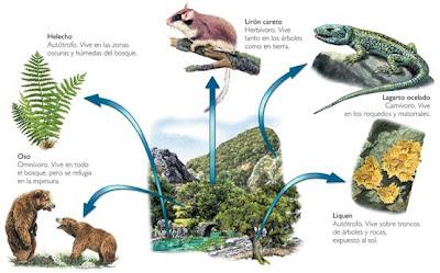 adaptación de los seres vivos al medio