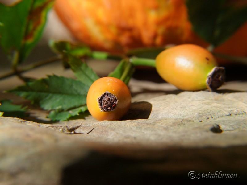 Herbstdeko mit Hagebutten
