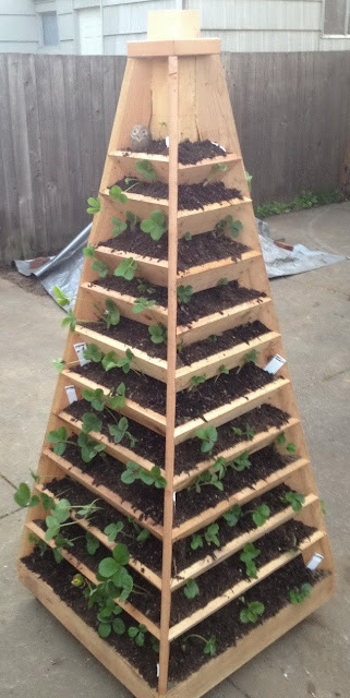 Pirámide vertical para plantar fresas