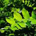 MRV planta mais de 97 mil árvores nos seis primeiros meses de 2017