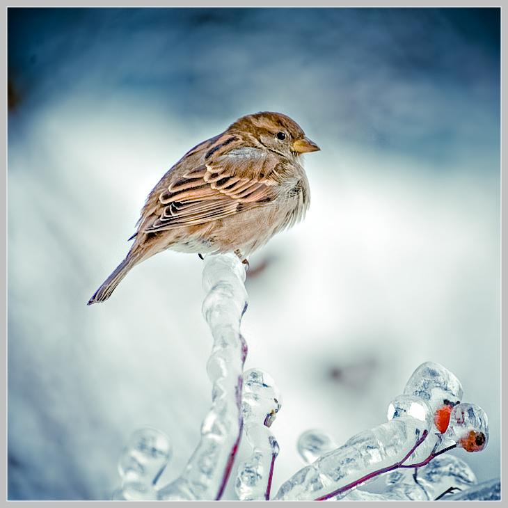 Bird Pictures Amazing Birds