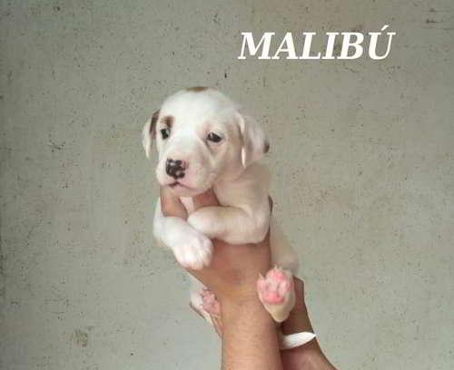 cachorros talla mediana 4