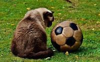 Il calcio è amorale!