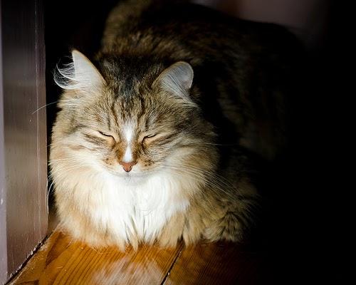 Feline Smile by Martin Kenny