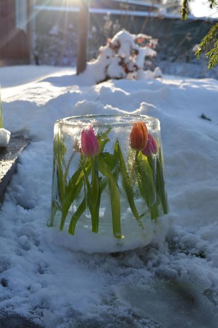 talvi aurinko tulppaanijäälyhty