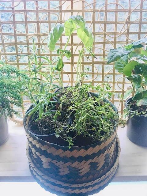 boho basket herb garden herbs