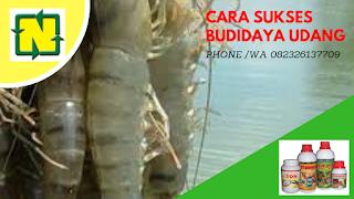 http://www.agenpupuksupernasa.com/2018/12/jual-ton-nasa-untuk-udang-di-madura.html