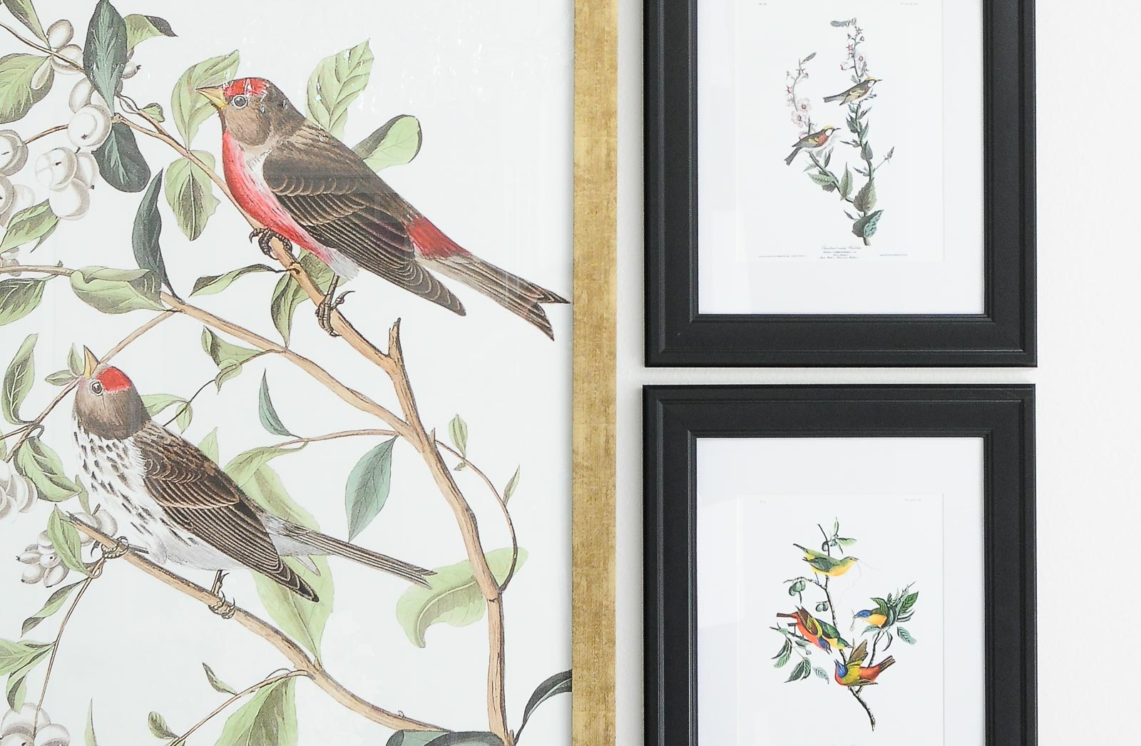 Botanical and audubon bird gallery wall ideas for a dining space.