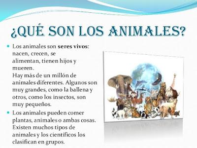 ¿Que son los animales?