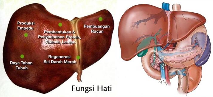 Pengobatan Tradisional Liver Bengkak Tanpa Operasi