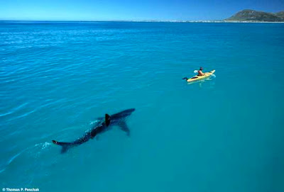 Infinite People: Shark Follows Kayaker