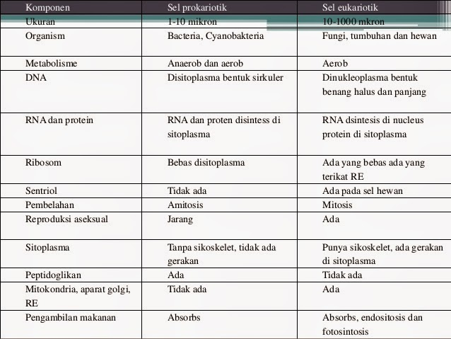Pengertian Dan Perbedaan Sel Prokariotik Dan Eukariotik Materi Pelajaran
