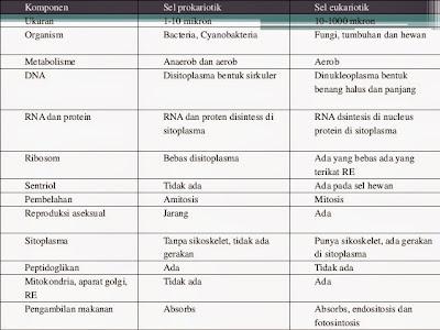 Perbedaan Prokariotik dan Eukariotik