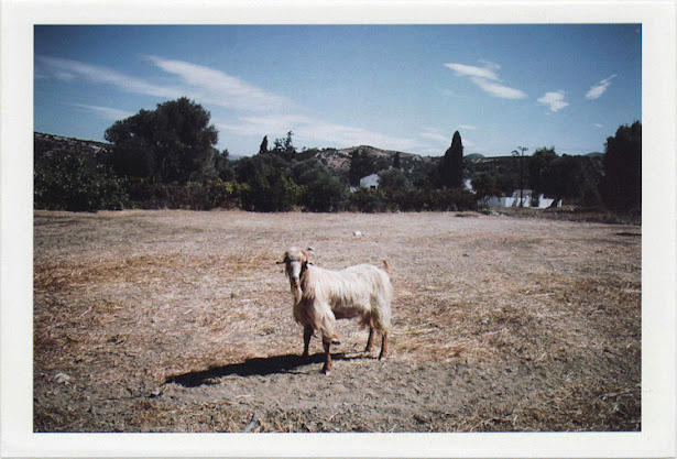 dirty photos - time - cretan landscape photo of angry goat