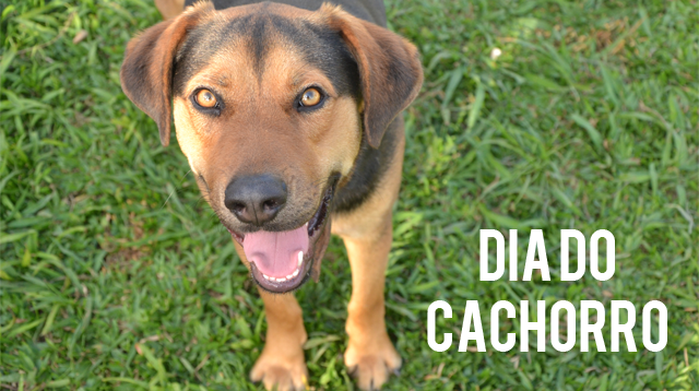dia-do-cachorro-bitcao