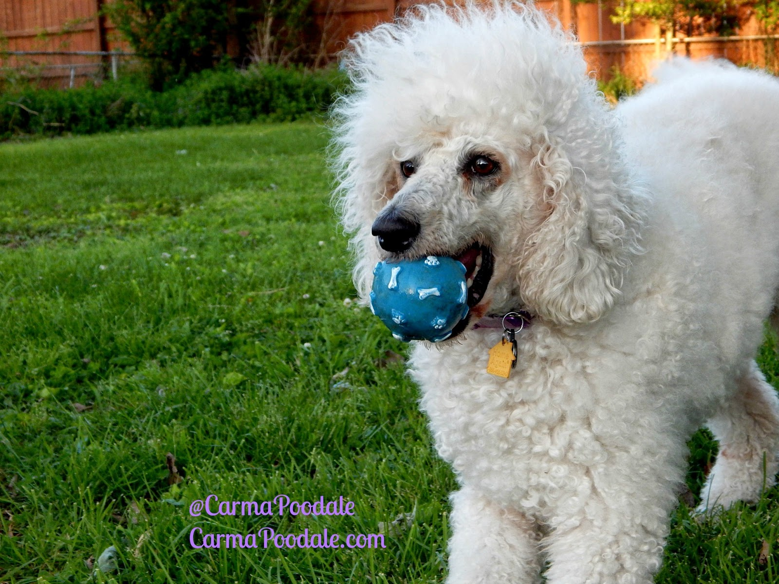 carma with ball in mouth