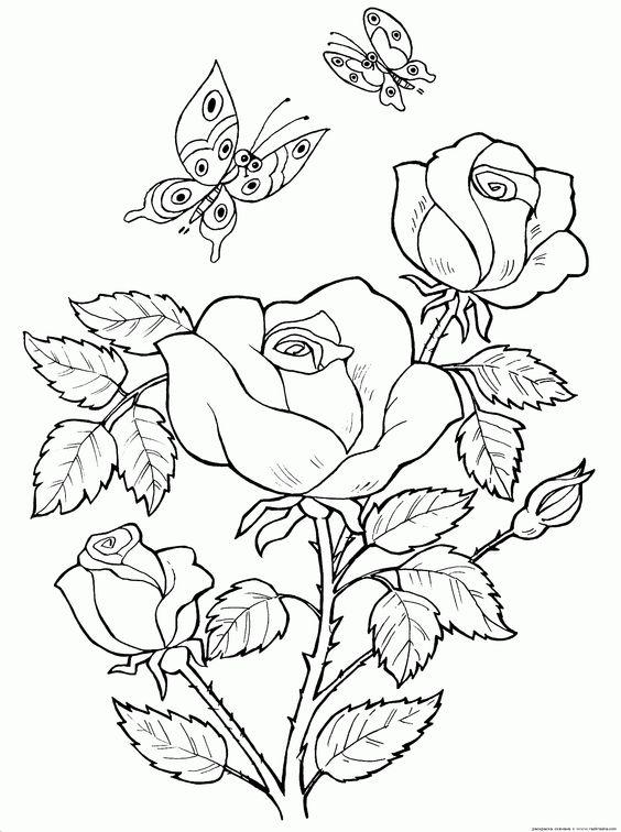 Tranh tô màu hoa hồng và con bướm