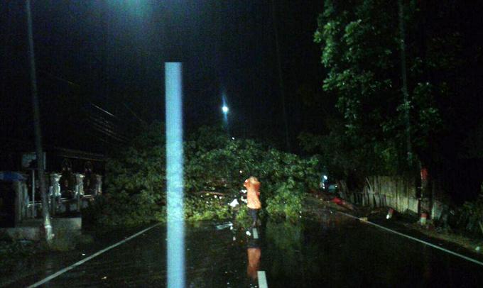 Diterpa Angin Kencang, 7 Pohon Pelindung di Bone Tumbang