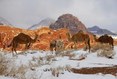 Salju di gurun sahara tanda kiamat?