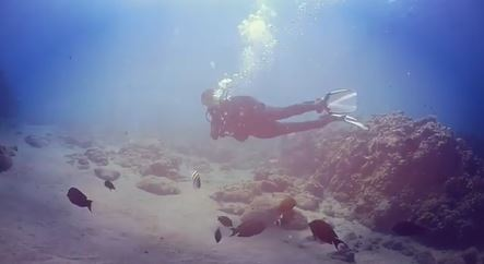Angel Locsin Had An Underwater Adventure With Ryza Cenon And Neil Arce
