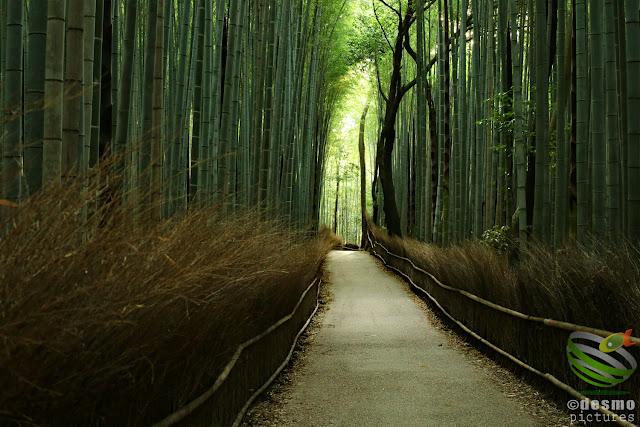 京都~竹林の小径