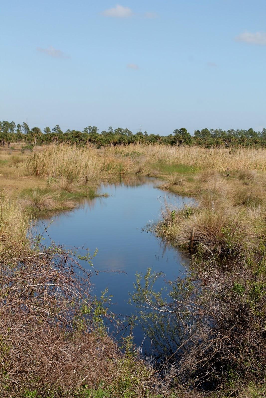 Zonas pantanosas