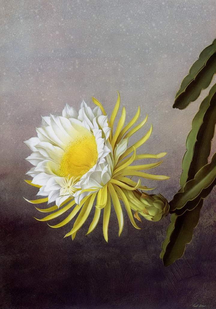 Paul Jones. Акварельные рисунки цветов 15