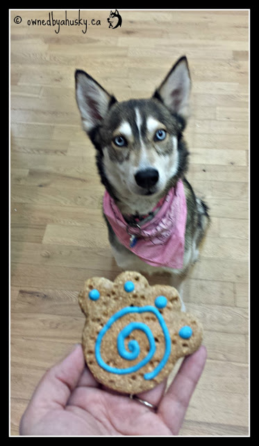 Husky wants a cookie