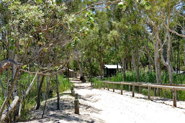 Ben Ewa Camp Campground Moreton Island Unterkunft Wald
