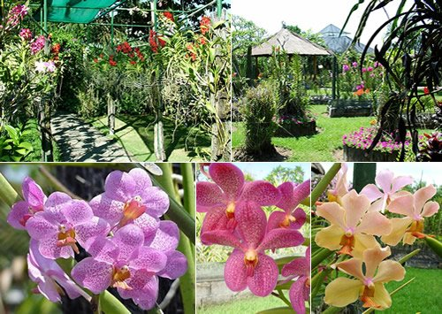 Bali Orchid Garden Location Map,Location Map of Bali Orchid Garden,Bali Orchid Garden accommodation destinations attractions hotels map reviews photos pictures,bali orchid garden home entrance fee review,cut flowers orchid flasks bali