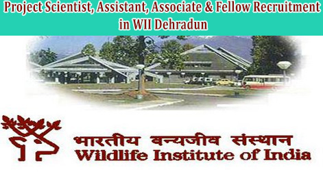 Jobs in Dehradun Wildlife Institute of India Recruitment in Project Scientist, Assistant, Associate & Fellow @www.wii.gov.in