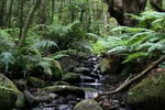 Bosque de laurisilva en el Parque Nacional de Garajonay