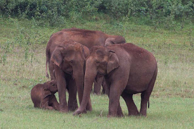 Periyar National Park, Kerala, India, Wildlife, Holiday Destination.