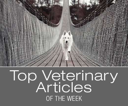 Top Veterinary Articles of the Week: Signs of Heat Stroke, CBD Oil for Dogs, and more ...