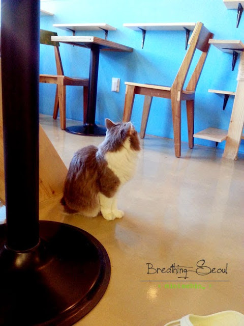 cat cafe sinchon seoul