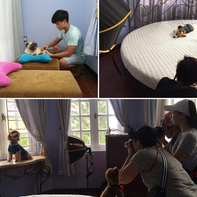 Khách sạn 5 sao cho thú cưng Bed and Pet First