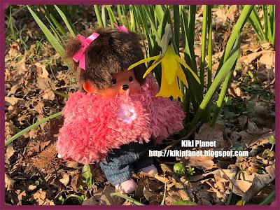 kiki monchhichi fleurs jonquilles narcisses forêt rouelles printemps sauvages