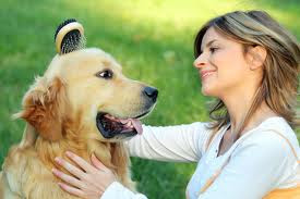 cuidado apropiado de su perro en epoca de verano