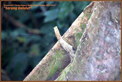 Gambar sarang kelulut di dalam hutan di Taman Negara Malaysia di Kuala Tahan