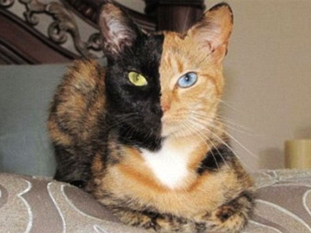 The Relationship Between Coat Color And Personality In Cats